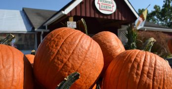 """<span class=""""entry-title-primary"""">Fall Favorites</span> <span class=""""entry-subtitle"""">Check out these great options for apple-picking, pumpkin patches and more!</span>"""