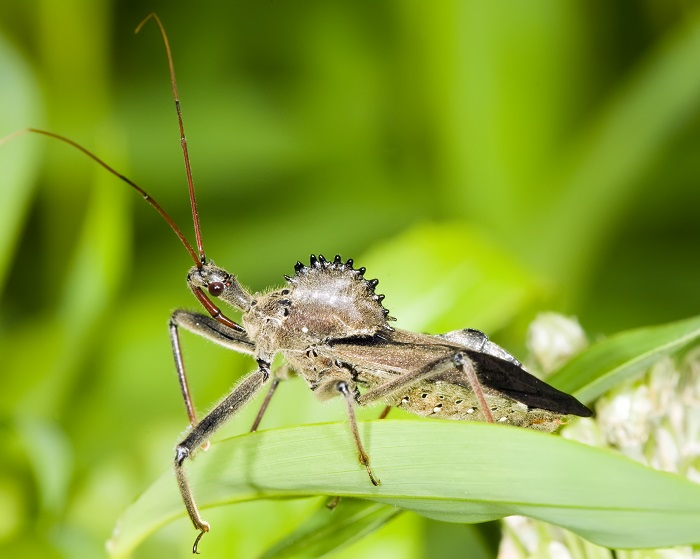 """For the Love of Insects"" Wild Walks at Ladew Gardens"