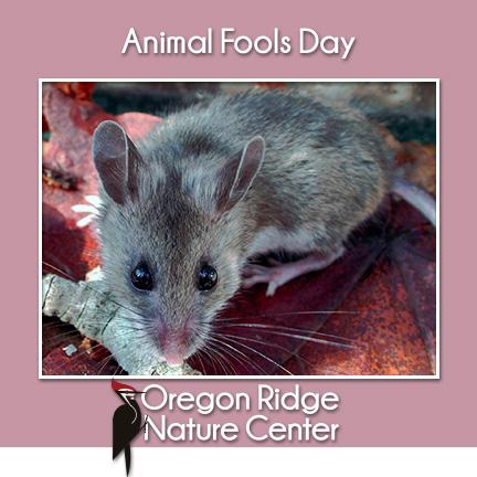 Animal Fools Day