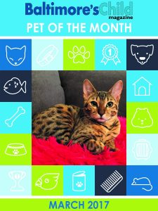 Meet Izzy, our Pet of the Month