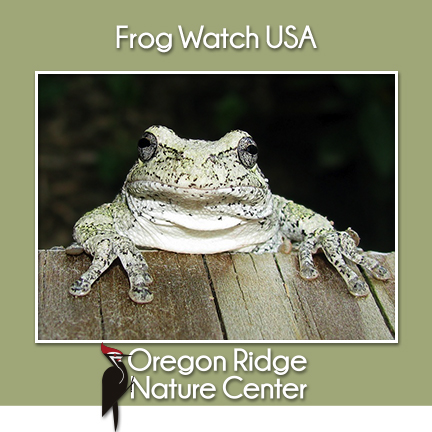 Frog Watch USA