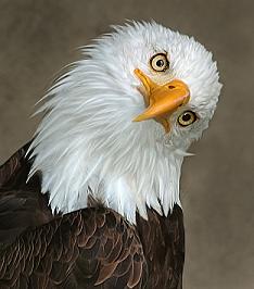 Natural World of Art: Bird Art @ Holt Park
