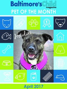 Meet Houdini, Winner of our Pet Photo of the Month Contest