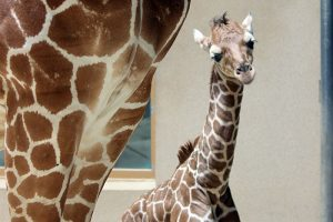 "<span class=""entry-title-primary"">Cute Animal Alert!</span> <span class=""entry-subtitle"">Update on the zoo's newest baby giraffe</span>"