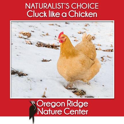 Naturalist's Choice – Cluck like a Chicken