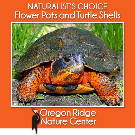 Naturalist's Choice – Flower Pots and Turtle Shells