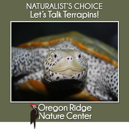 Naturalist's Choice – Let's Talk Terrapins!