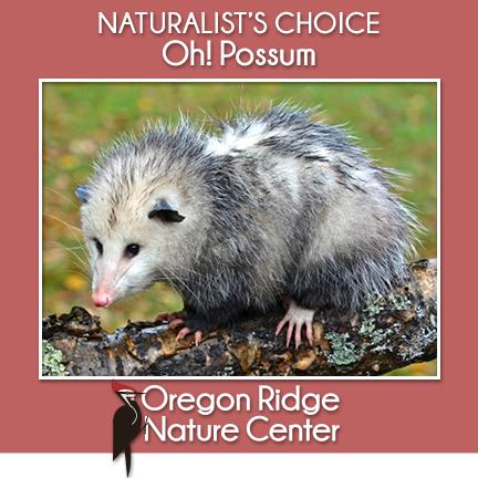 Naturalist's Choice  – Oh! Possum