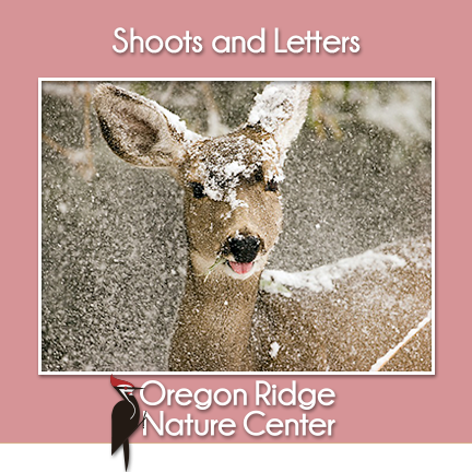 Shoots and Letters – Animals in Winter