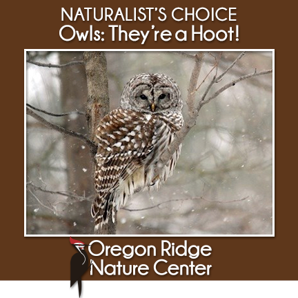 Naturalist's Choice – Owls: They're a Hoot!