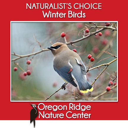 Naturalist's Choice – Winter Birds