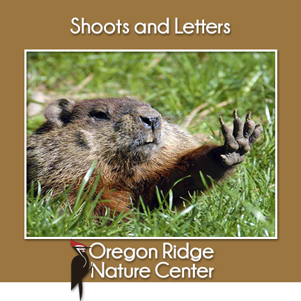 Shoots and Letters – Groundhog Day