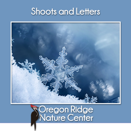 Shoots and Letters – Snow and Ice