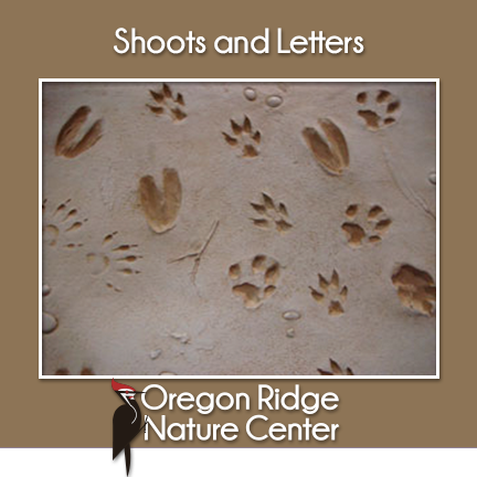 Shoots and Letters – Animal Tracks