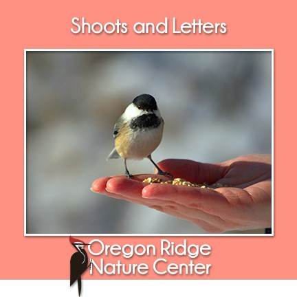 Shoots and Letters - Birds