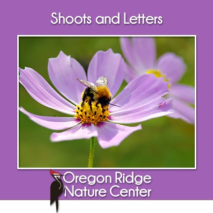 Shoots and Letters - Pollinators
