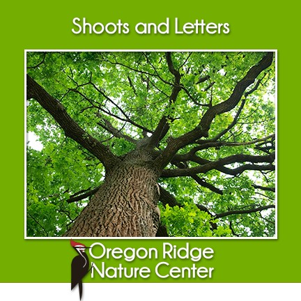Shoots and Letters - Trees