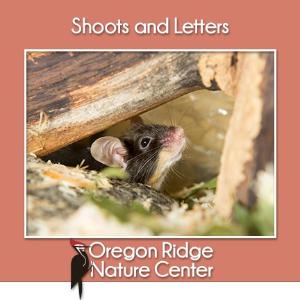 Shoots and Letters - What lives under logs?