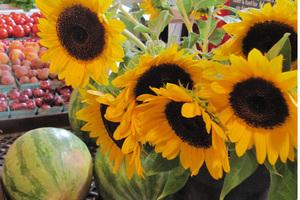 Baltimore County Farmers Market
