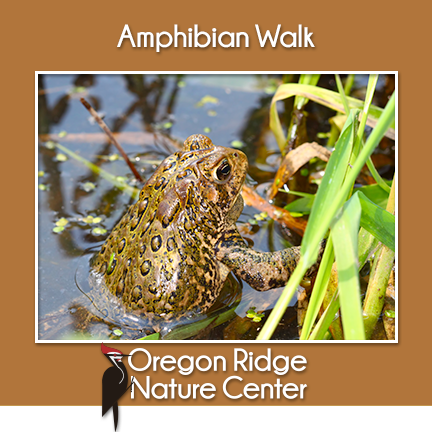Amphibian Walk