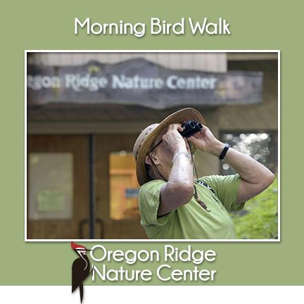 Morning Bird Walks