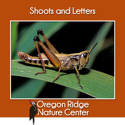 Shoots and Letters – Insects