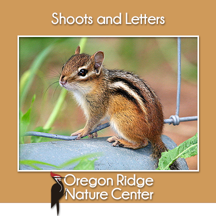 Shoots and Letters – Mammals