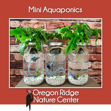 Mini Aquaponics