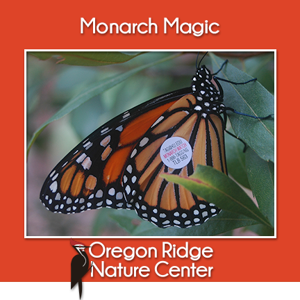Monarch Magic