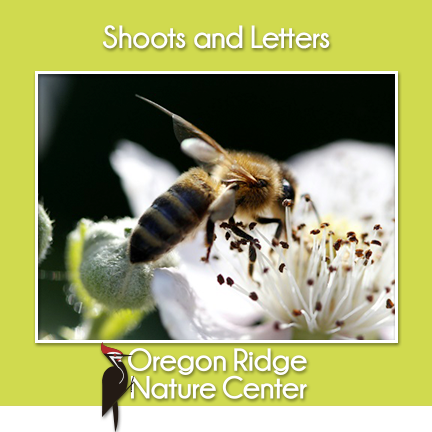 Shoots and Letters - Honeybees