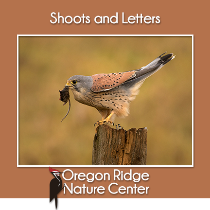Shoots and Letters - Brids of Prey