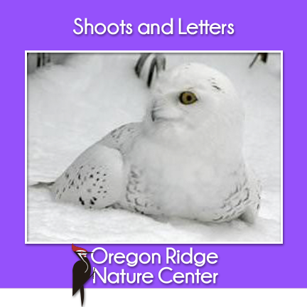 Shoots and Letters - Animals that Camouflage