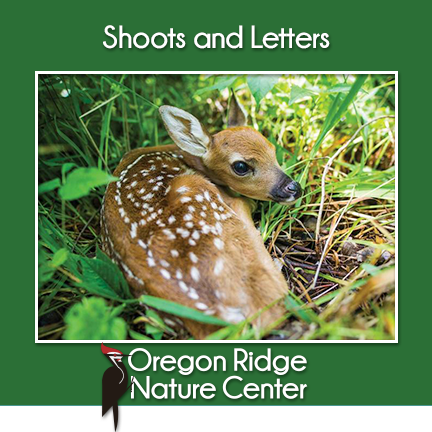 Shoots and Letters - Deer