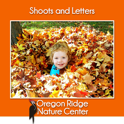Shoots and Letters - Autumn Leaves