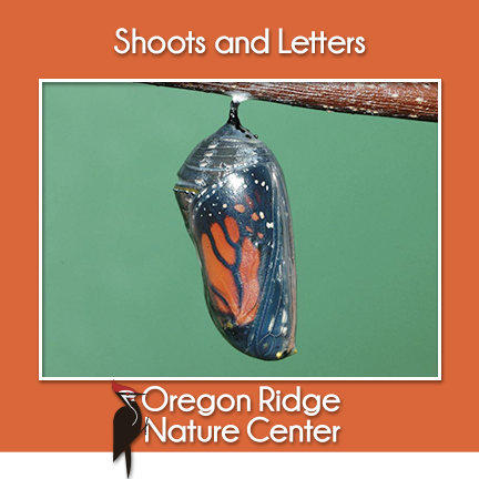 Shoots and Letters - Monarch Butterflies