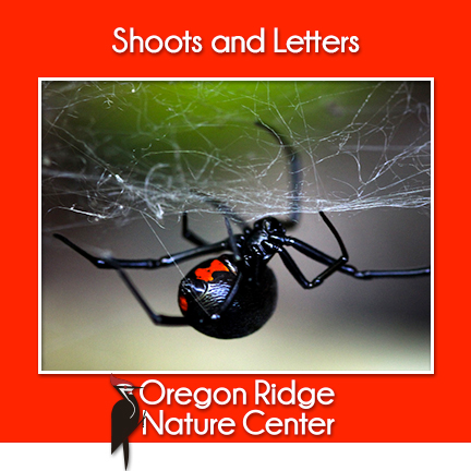 Shoots and Letters - Animals with Warning Colors