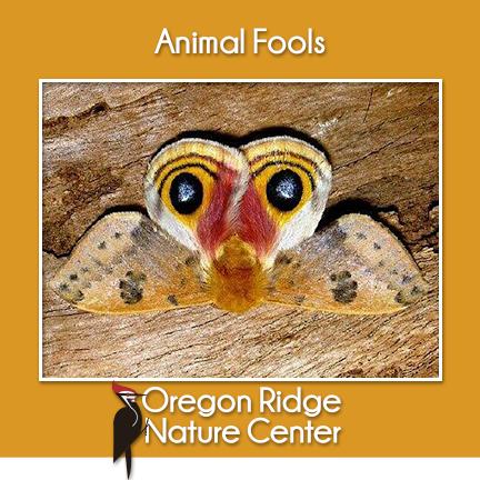 Animal Fools