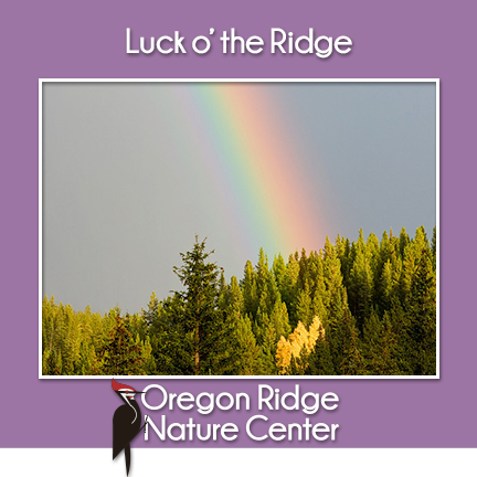 Luck o'the Ridge