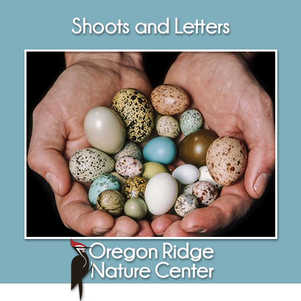 Shoots and Letters – Animals that Lay Eggs