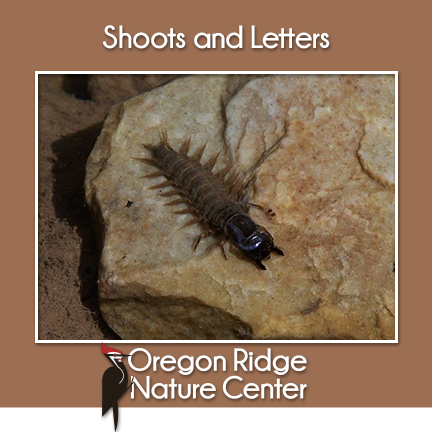 Shoots and Letters – Aquatic Insects