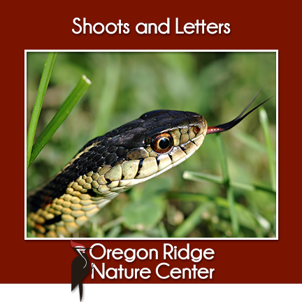 Shoots and Letters – Snakes