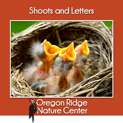 Shoots and Letters – Signs of Spring