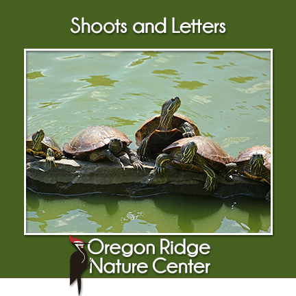 Shoots and Letters – Turtles