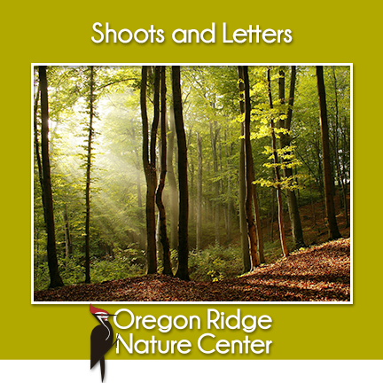 Shoots and Letters – Forests