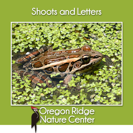 Shoots and Letters – Frogs