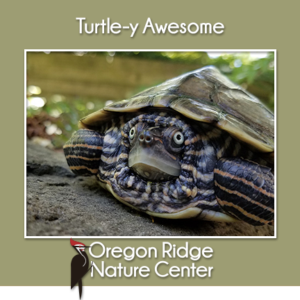 Turtle-y Awesome