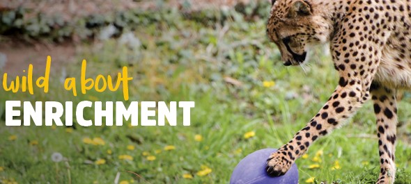 Wild About Animal Enrichment Day