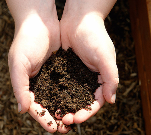 NATURE CONNECTIONS: Soil Smarts