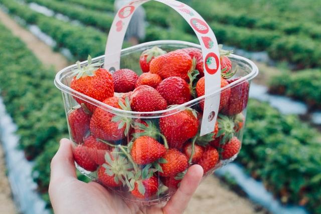 fruit picking fun