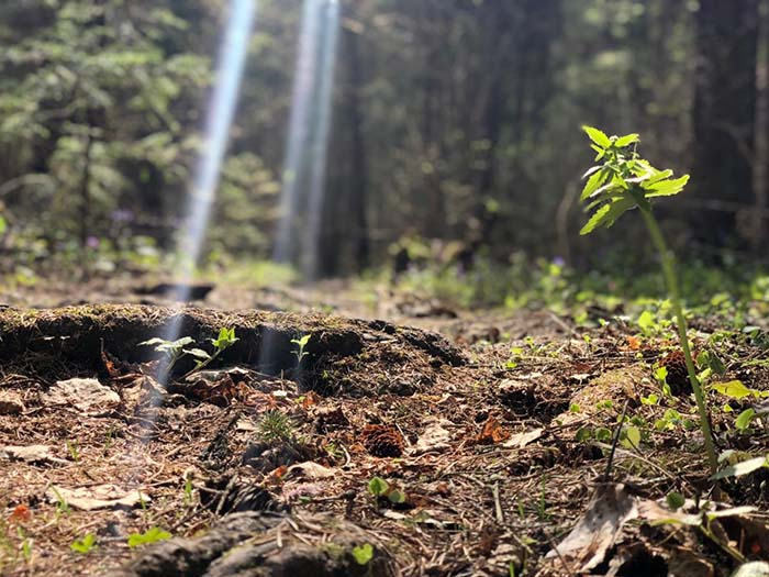 Nature Connections: Life of the Forest Floor